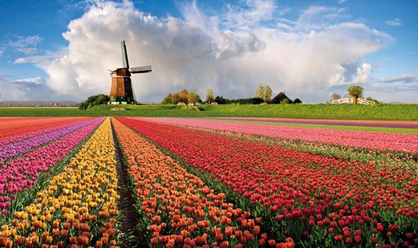AMSTERDAM -tulipani